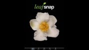 Leafsnap Software